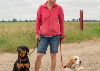 Adult female professional dog walker with two dogs on lead.Cambridgeshire,UK.