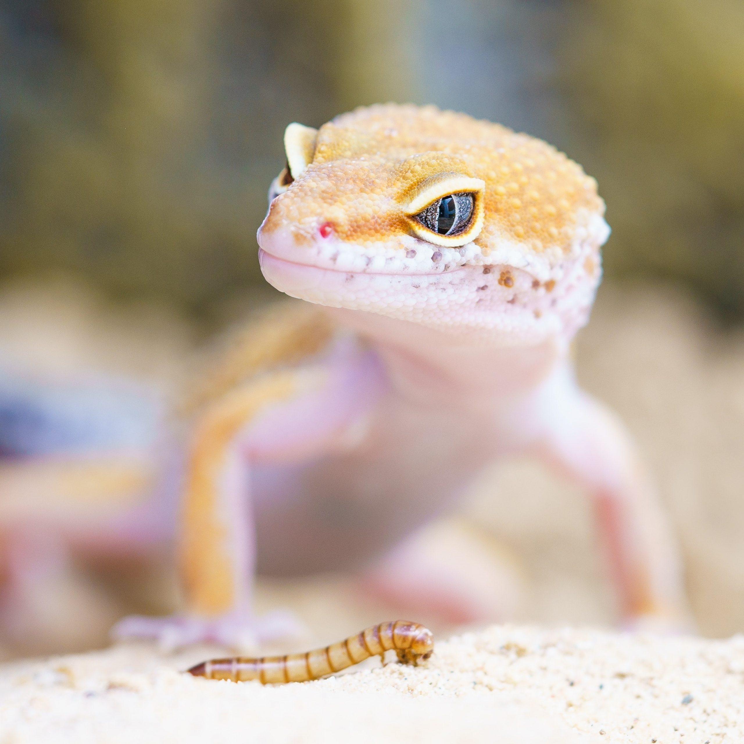 animal-biology-blur-close-up-407037