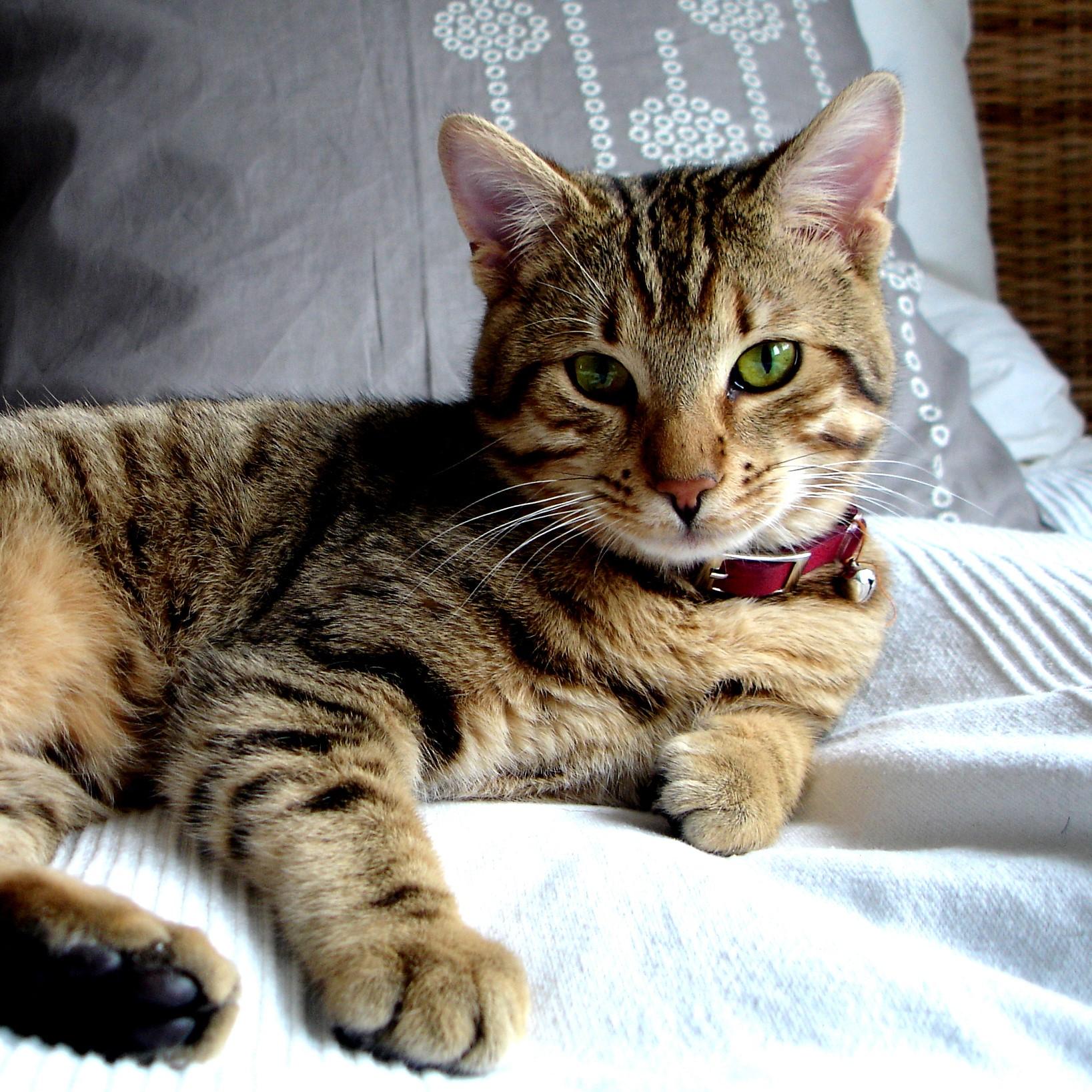 cat-1393633