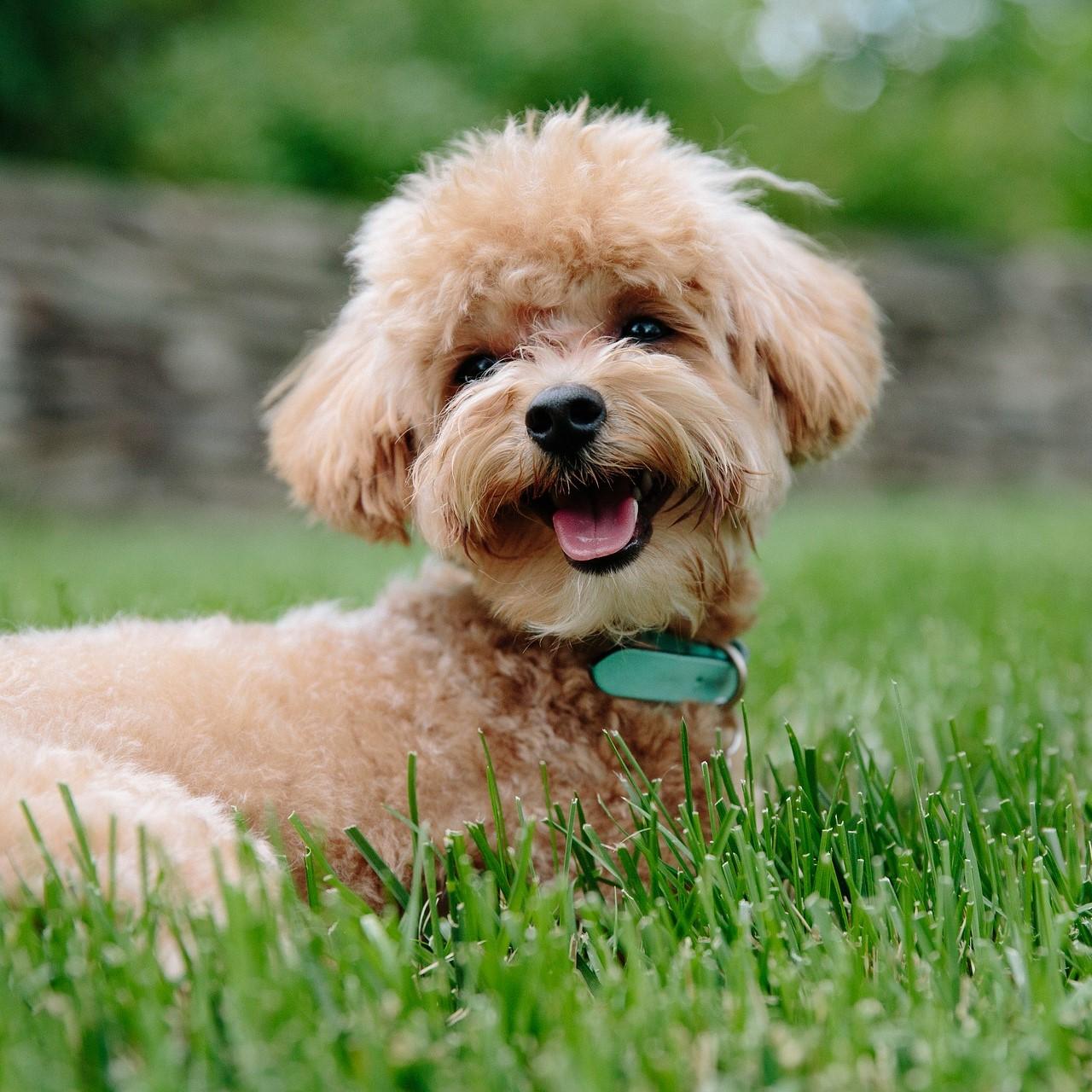 puppy-3979350_1920