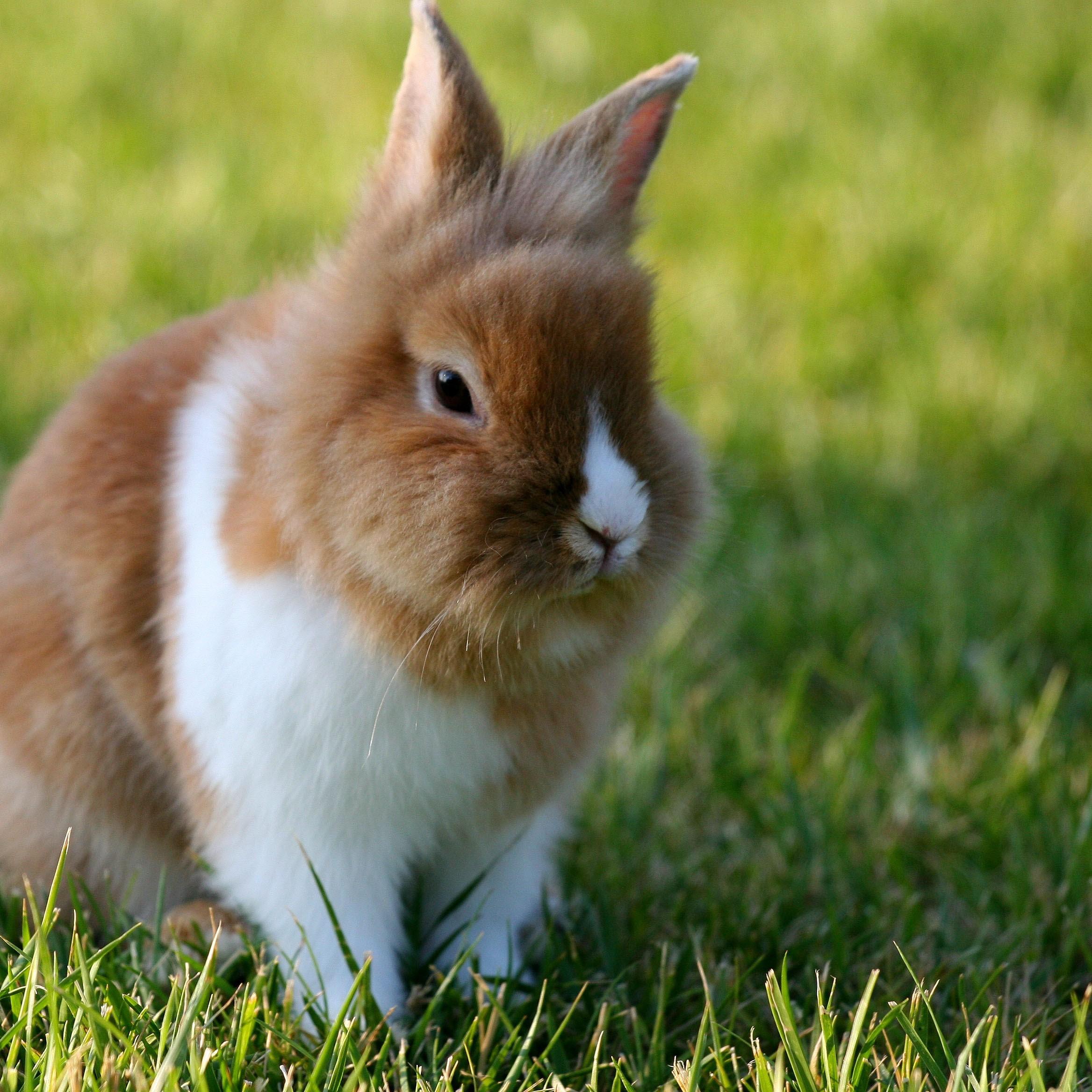 rabbit-in-farm-1563129